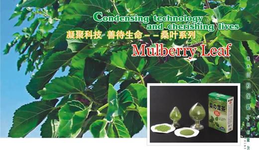 Barley Green Powder Barley Green China Barley Green China